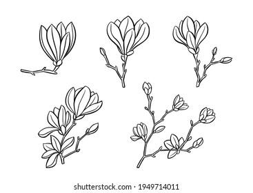 Magnolia outline flowers. Clipart for banner, poster, flyer, greeting card, web design, print design. Vector illustration.