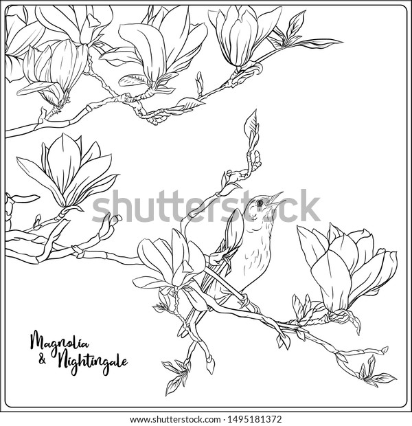 Magnolia tree blossom from coloring page. | Flower drawing, Flower ... | 620x600