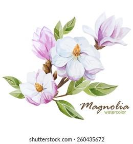 magnolia, watercolor, flowers,