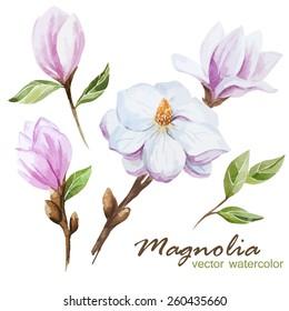 magnolia, watercolor, flowers, nature