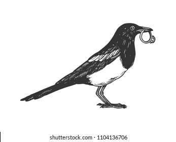 Magpie bird with golden ring animal engraving vector illustration. Scratch board style imitation. Black and white hand drawn image.