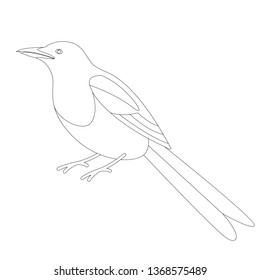 magpie bird, vector illustration, lining draw, profile side