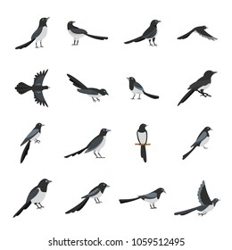 Magpie crow bird icons set. Flat illustration of 16 magpie crow bird vector icons for web