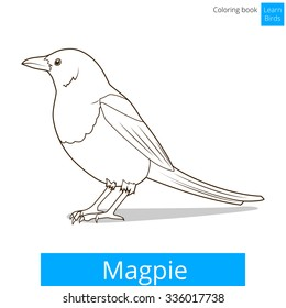 Magpie Learn Birds Educational Game Coloring Book Vector Illustration
