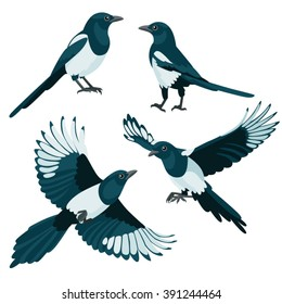 Magpies on white background / Three are two sitting magpies and two flying magpies in cartoon style