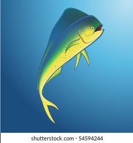 Mahi Mahi Underwater
