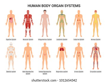 body organs images, stock photos & vectors | shutterstock