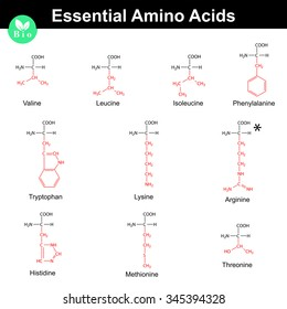 Main essential amino acids with marked radicals, chemical structural formulas, 2d vector set on white background, eps 8