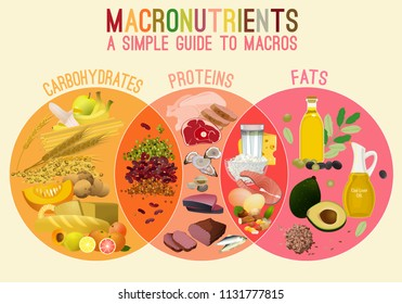 Main food groups - macronutrients. Carbohydrates, fats and proteins in comparison. Dieting, healthcare and eutrophy concept. Vector illustration isolated on a lighr beige background. Landscape poster.