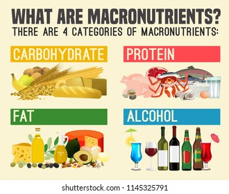 Main food groups - macronutrients. Carbohydrates, fats, proteins  and alcohol. Dieting, healthcare and eutrophy concept. Vector illustration isolated on a light beige background. Landscape poster.