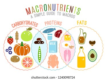 Main food groups - macronutrients. Carbohydrates, fats and proteins in comparison. Dieting, healthcare and eutrophy concept. Vector illustration isolated on a white background. Landscape poster.