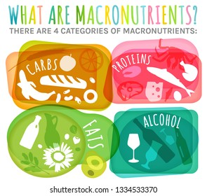 Main food groups - macronutrients. Carbohydrates, fats, proteins, alcohol in comparison. Dieting, healthcare and eutrophy concept. Vector illustration isolated on a white background. Landscape poster.