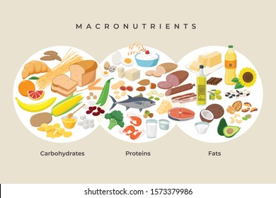 Main food groups - macronutrients. Carbohydrates, fats and proteins in comparison, foods icons in flat design isolated. Dieting, healthy eating concept. Vector illustration, infographic elements.