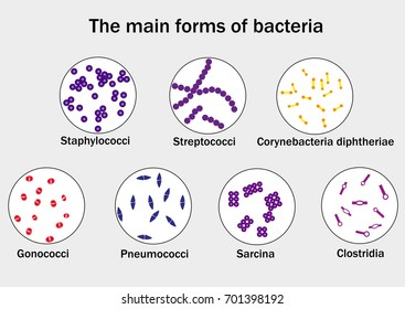 The main forms of bacteria