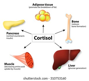main functions cortisol in the body. It is hormone Released in response to stress and low blood-glucose concentration.