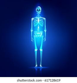 Main parts of human skeleton system, shiny skull and skeleton