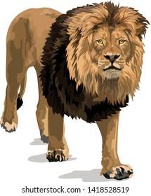 Majestic Golden Male Lion, With Dark Flowing Mane, Walking Vector