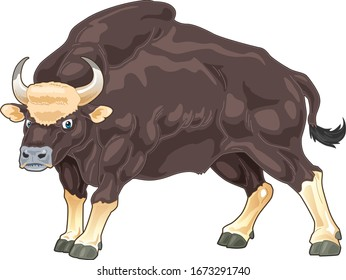 Malayan Gaur cartoon illustration with standing position