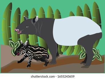 Baby Tapir Images Stock Photos Vectors Shutterstock