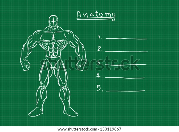 Male Anatomy Front Reference Stock Vector (Royalty Free