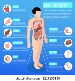 Male anatomy isometric poster with infographic model of human body and description of internal organs vector illustration