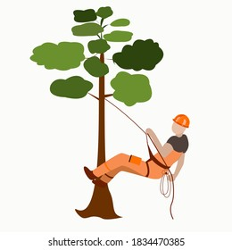 A male arborist climbs a tree on a rope with insurance