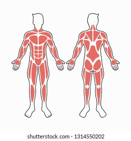 Male body muscles vector