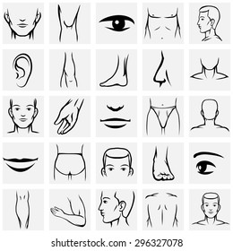 Male body parts icons set. Arm and foot, leg and torso, elbow and ankle, wrist and finger, eye and nose, vector illustration