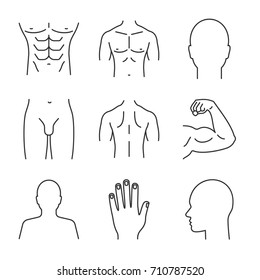 Male body parts linear icons set. Head, hand, bicep, torso, back, buttocks, profile, groin. Thin line contour symbols. Isolated vector outline illustrations