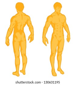 Male body shapes, human body outline, torso of man athlete front and rear view, posterior and anterior view, strength, fitness, power, full body