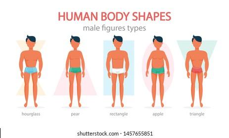 Imágenes, fotos de stock y vectores sobre Male Body Shape