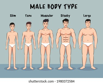 What does stocky body type mean