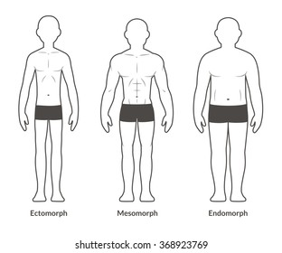 Male body types: Ectomorph, Mesomorph and Endomorph. Skinny, muscular and fat physique. Isolated vector illustration.