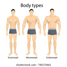 Male body types. Ectomorph, mesomorph and endomorph types