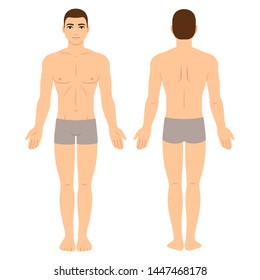 Male body in underwear, front and back view. Athletic young man physique, vector clip art for medical infographics and fashion illustration.