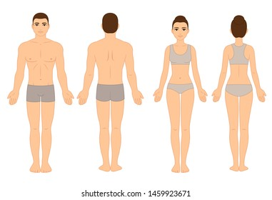 Male and female body chart, front and back view, naked in underwear. Blank human body template for medical infographic. Stylized color vector clip art illustration.