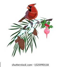 Male red cardinal on pine tree branch with pine cones and snow Christmas tree decoration vector isolated winter illustration