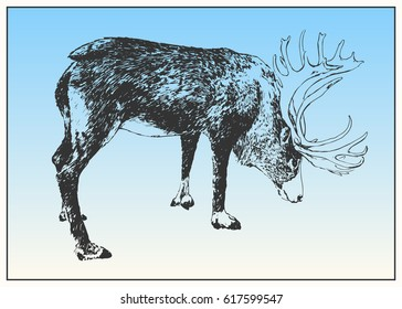 Male reindeer drawed with pen and ink isolated on white background. Black and white dashed style sketch, line art. Western classical trend of book illustration and comic art.
