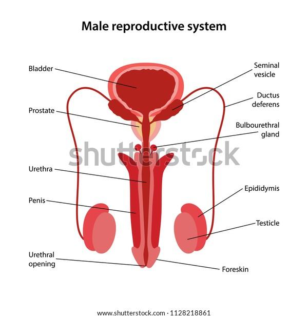Prostatitis mint szórólap Éhség kezelés prosztatitis