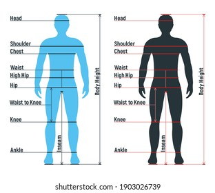 Male size chart anatomy human character, people dummy front and view side body silhouette, isolated on white, flat vector illustration. Cartoon man mannequin people dimension scale.