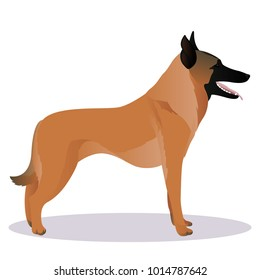 Malinois cartoon dog