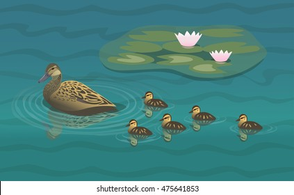 Mallard duck with ducklings/Wild duck swiming near the lily pads with her brood of ducklings