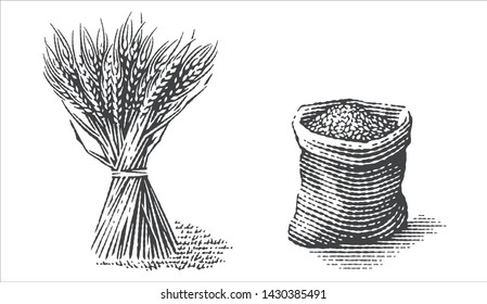 Malt in burlap bag and sheaf of wheat. Hand drawn engraving style.