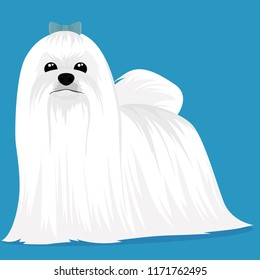 Maltese dog cartoon
