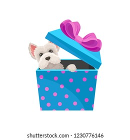 Maltese dog peeking out of blue gift box with pink bow. Adorable puppy. Flat vector element for Christmas postcard