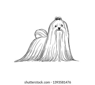 Maltese dog vector illustration. Black and white