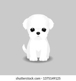Maltese Puppy Vector Illustration. Dog isolated
