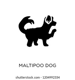 Maltipoo dog icon. Maltipoo dog symbol design from Dogs collection. Simple element vector illustration on white background.