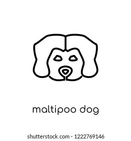 Maltipoo dog icon. Trendy modern flat linear vector Maltipoo dog icon on white background from thin line dogs collection, editable outline stroke vector illustration