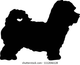 Maltipoo silhouette real in black